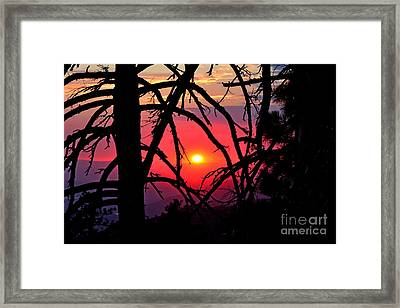 Through The Pines Landscape Framed Print