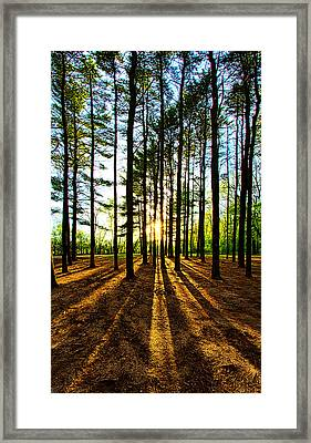 Through The Pines Framed Print