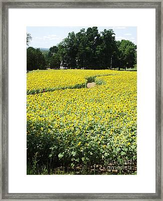 Through The Sunflowers Framed Print by Michelle Welles