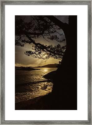 Through The Trees Framed Print by Ben Foster