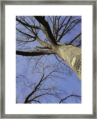 Through The Trees Framed Print by Jaime Neo
