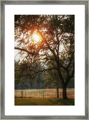 Through The Trees Framed Print by Melanie Lankford Photography