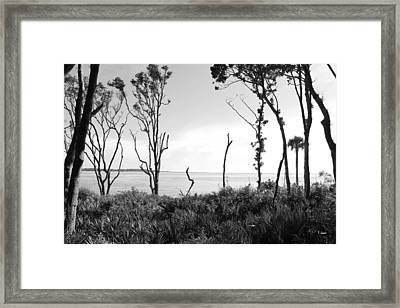 Through The Trees Framed Print by Thomas Leon