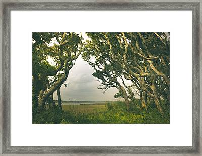 Through The Twisty Trees Framed Print