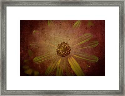 Through The Veil Framed Print by Steven  Taylor