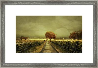Through The Vineyard Framed Print