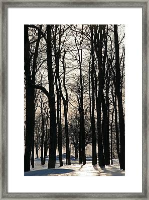 Through The Winter Trees Framed Print by Heather Allen