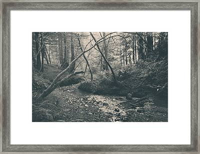 Through The Woods Framed Print by Laurie Search