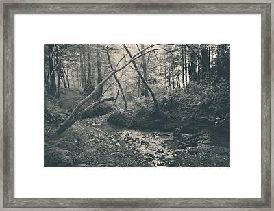 Through The Woods Framed Print