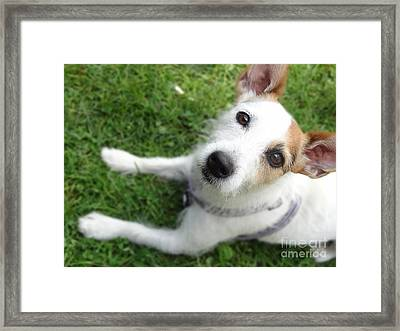 Throw It Again Framed Print
