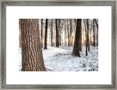 Thru The Pines Framed Print by Andrea Galiffi