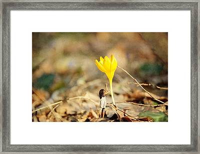 Thumbelina And The Crocus Framed Print
