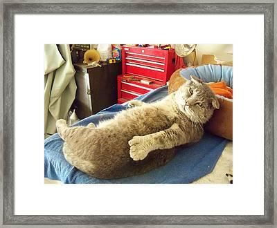 Thumbody Fixin To Rest Framed Print by Deborah Montana