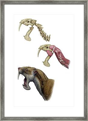 Thylacosmilus Sabre-toothed Cat Framed Print by Mauricio Anton