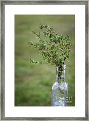Thyme In A Bottle Framed Print