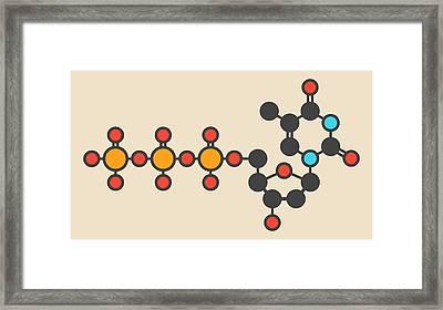Thymidine Triphosphate Molecule Framed Print by Molekuul