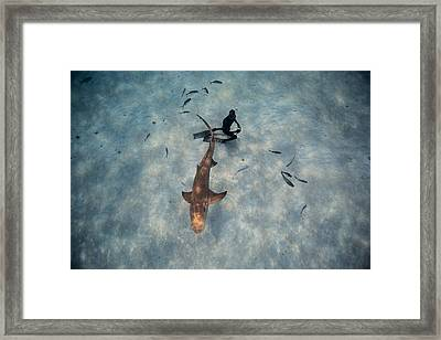 Tiburon Limon Framed Print by One ocean One breath