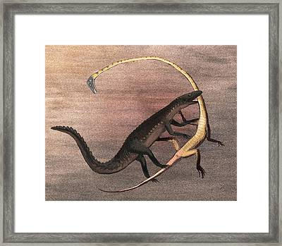 Ticinosuchus And Tanystropheus Fighting Framed Print