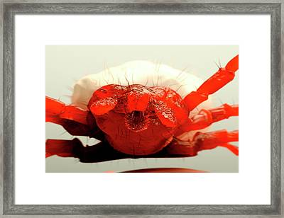 Tick Framed Print by Juan Gaertner