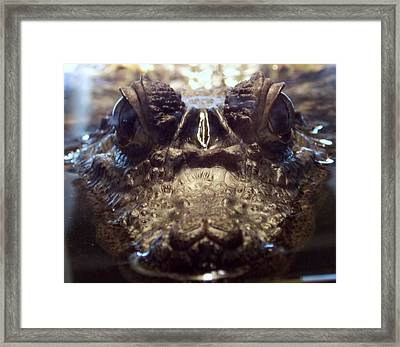 Framed Print featuring the photograph It's So Quiet, You Can Hear The Gators Breathing by John Glass