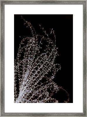 Tickle Framed Print by Carolyn Stagger Cokley