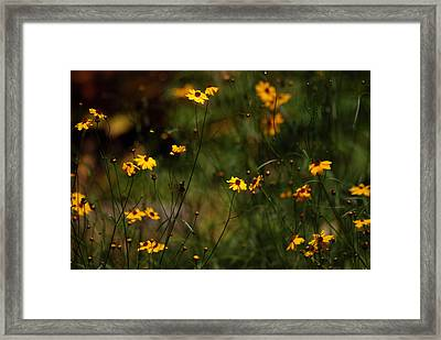 Tickseed Forest Framed Print by Lorenzo Cassina