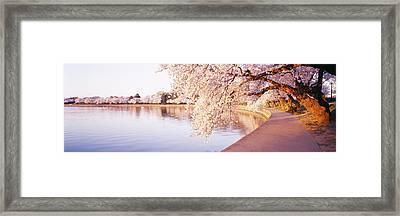 Tidal Basin, Washington Dc, District Of Framed Print