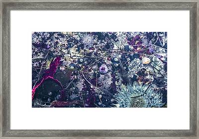 Framed Print featuring the mixed media Tidal Pool Assortment by Terry Rowe