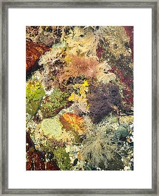Tidal Pool Color Framed Print by Debbie Green