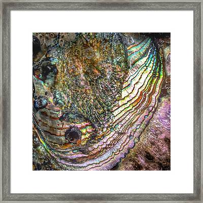 Tide And Time Framed Print by Casey Rasmussen White