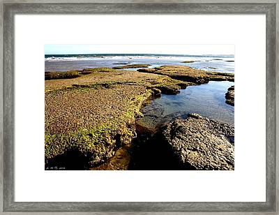 Tide Pool II Framed Print by Amanda Holmes Tzafrir