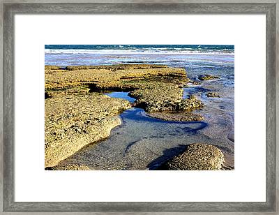Tide Pool IIi Framed Print by Amanda Holmes Tzafrir