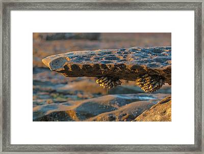 Tide Pools Framed Print