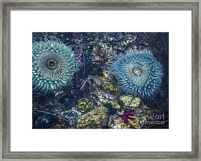Tidepool Abundance Framed Print