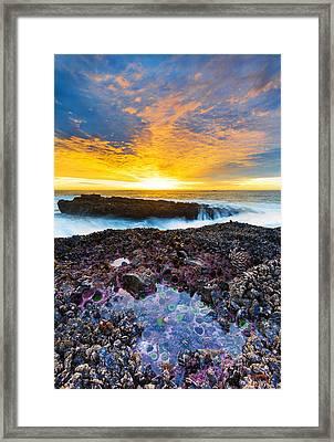 Tidepool Framed Print by Robert Bynum