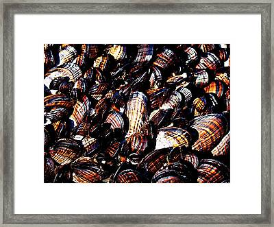 Tidewater Mussels Framed Print by Nick Kloepping