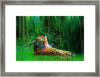 Tidy Tiger Strips Framed Print