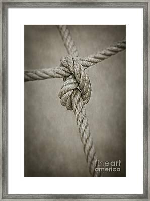 Tied Knot Framed Print by Carlos Caetano