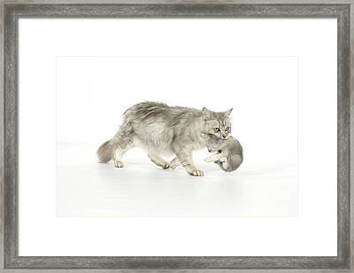 Tiffanie Cat And Kitten Framed Print