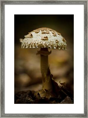 Tiffany Shroom Framed Print