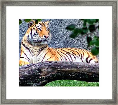 Framed Print featuring the photograph Tiger 1 by Dawn Eshelman