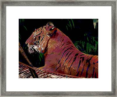 Tiger 2 Framed Print by David Mckinney