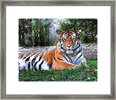 Framed Print featuring the photograph Tiger 2 by Marty Koch