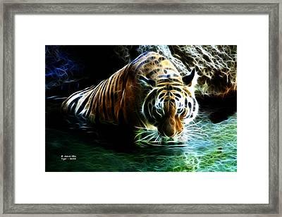 Tiger 3838 - F Framed Print