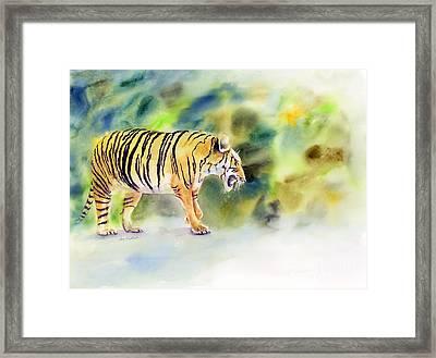 Tiger Framed Print by Amy Kirkpatrick
