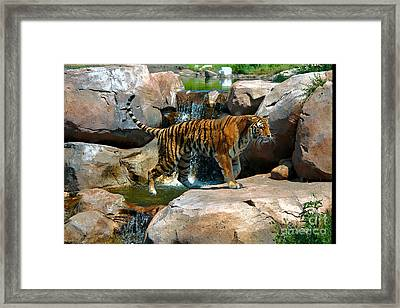 Tiger And Waterfall Framed Print