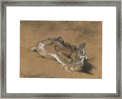 Tiger Attacking A Horse Framed Print by Celestial Images