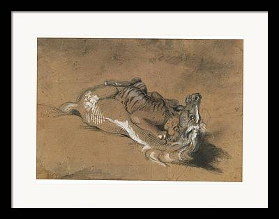 Tiger Attacks A Horse Paintings Framed Prints