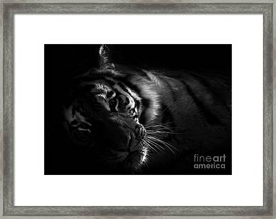 Tiger Beauty Framed Print