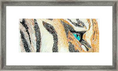 Framed Print featuring the drawing Tiger Blue by Stephanie Grant